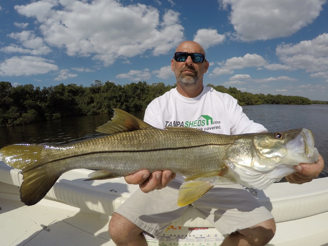1 tampa florida fishing charters and guides for snook for Tampa florida fishing charters